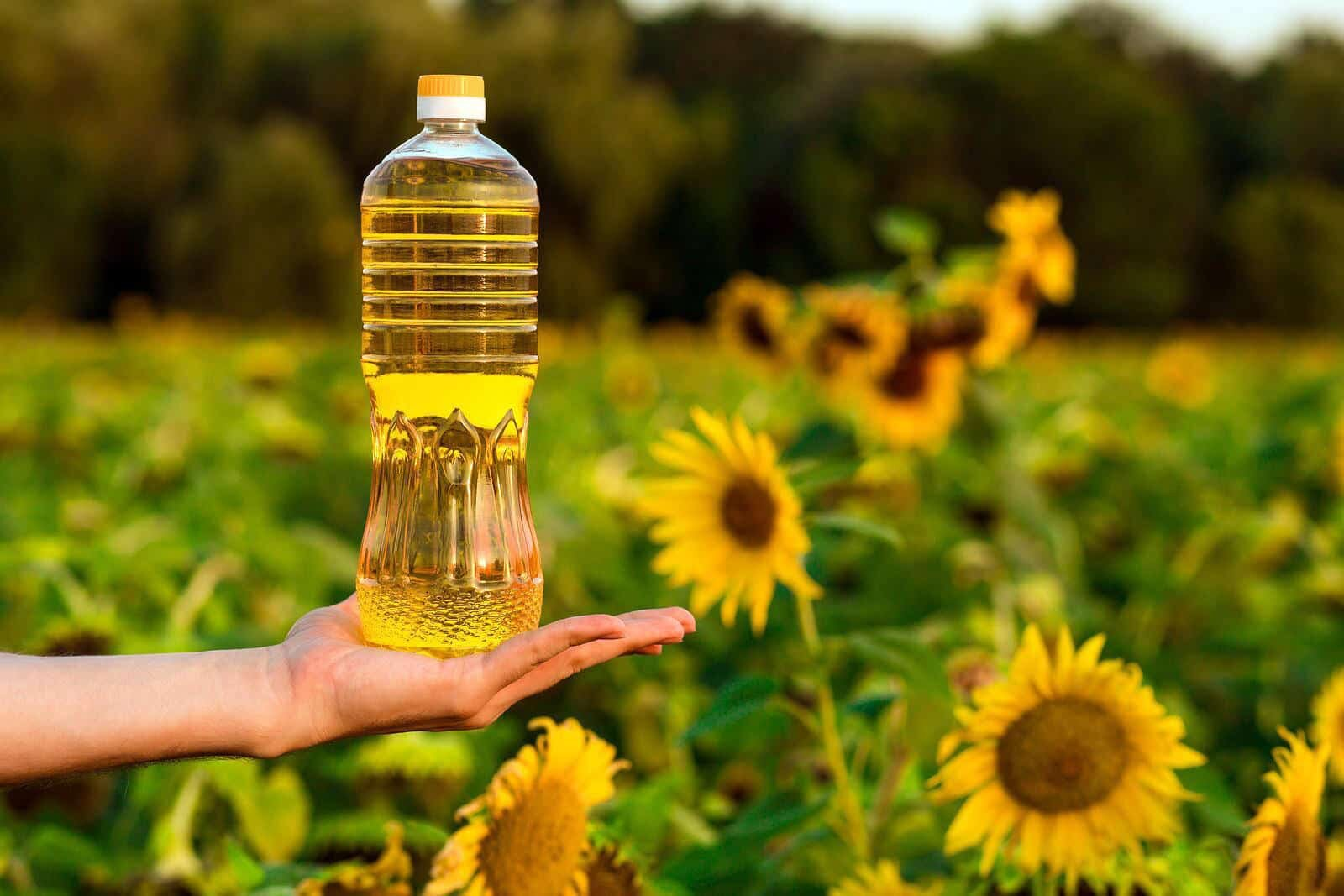 sunflower oil and sunflower plants
