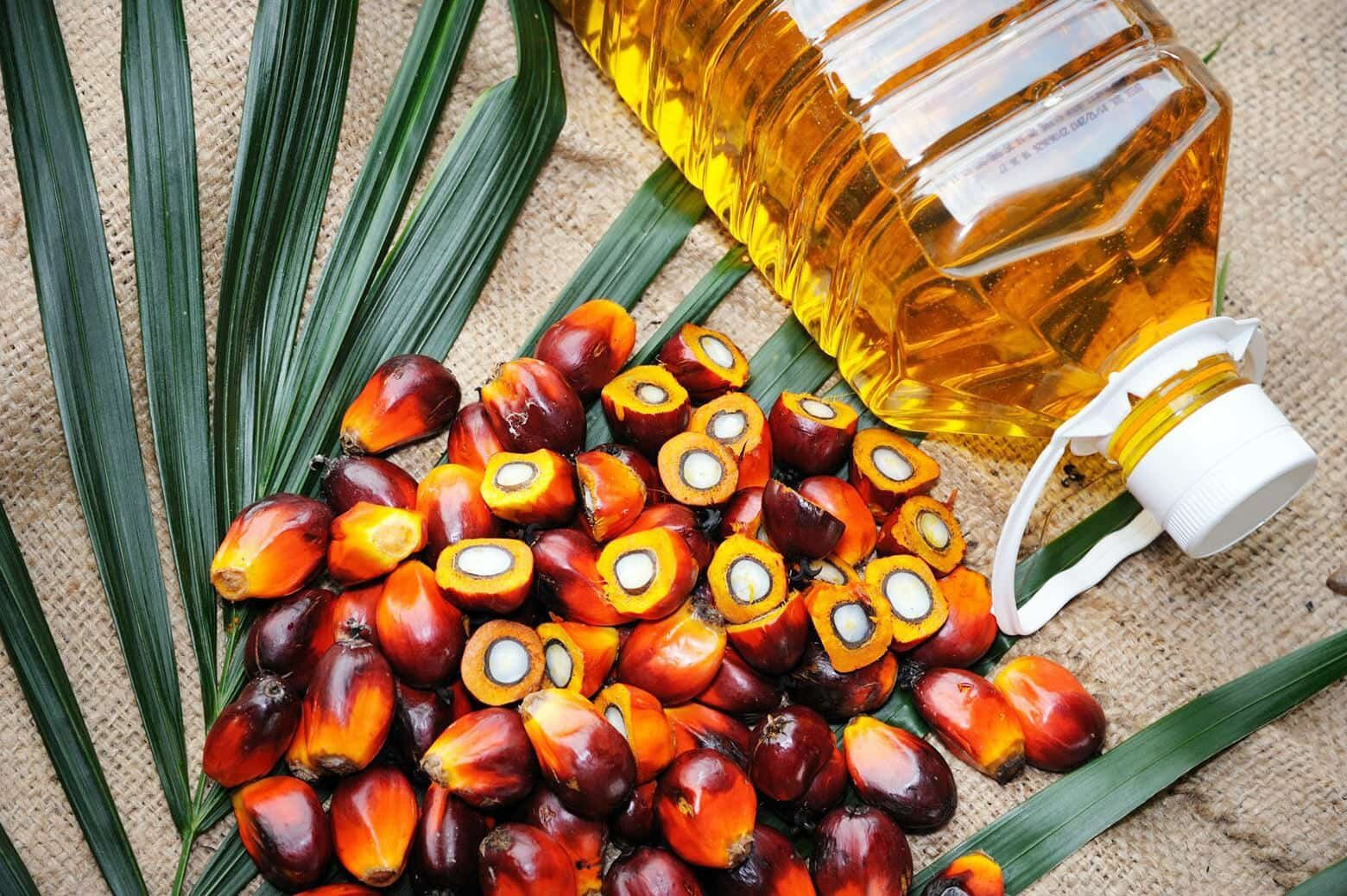 red palm fruits and palm kernel oil