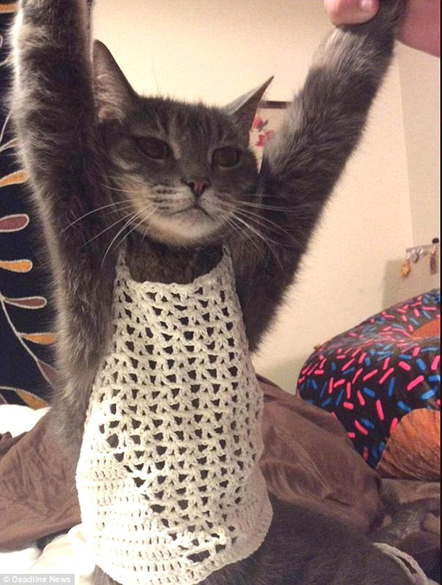 MEEEEEE - OWWWWWWW      Sizing gone wrong  (or very right, if you're a stylish cat
