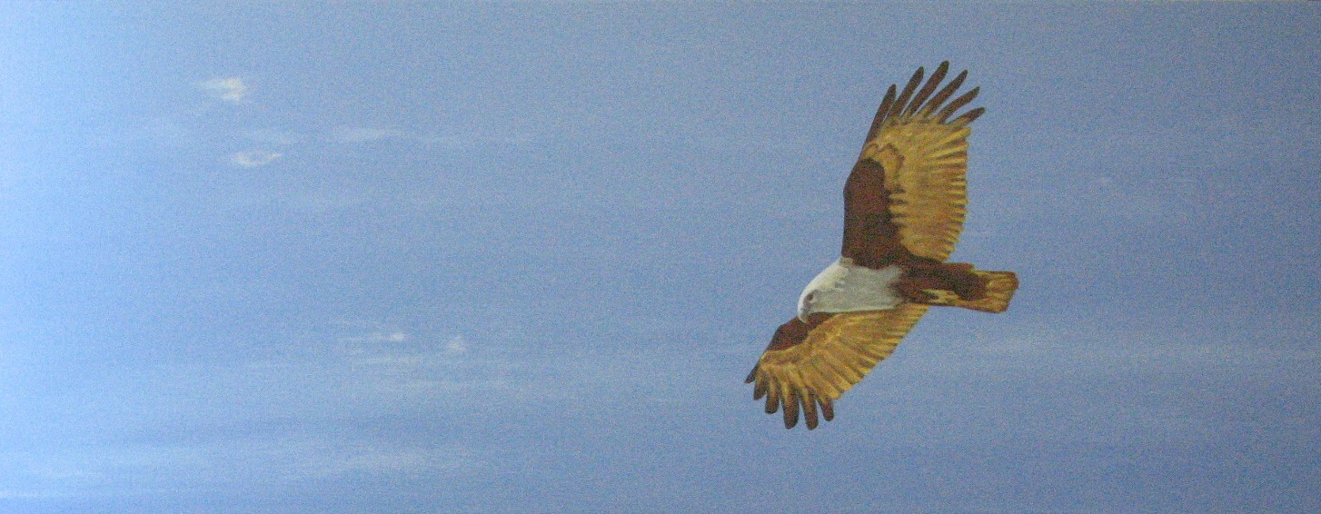 """Soar"" Acrylic on canvas"