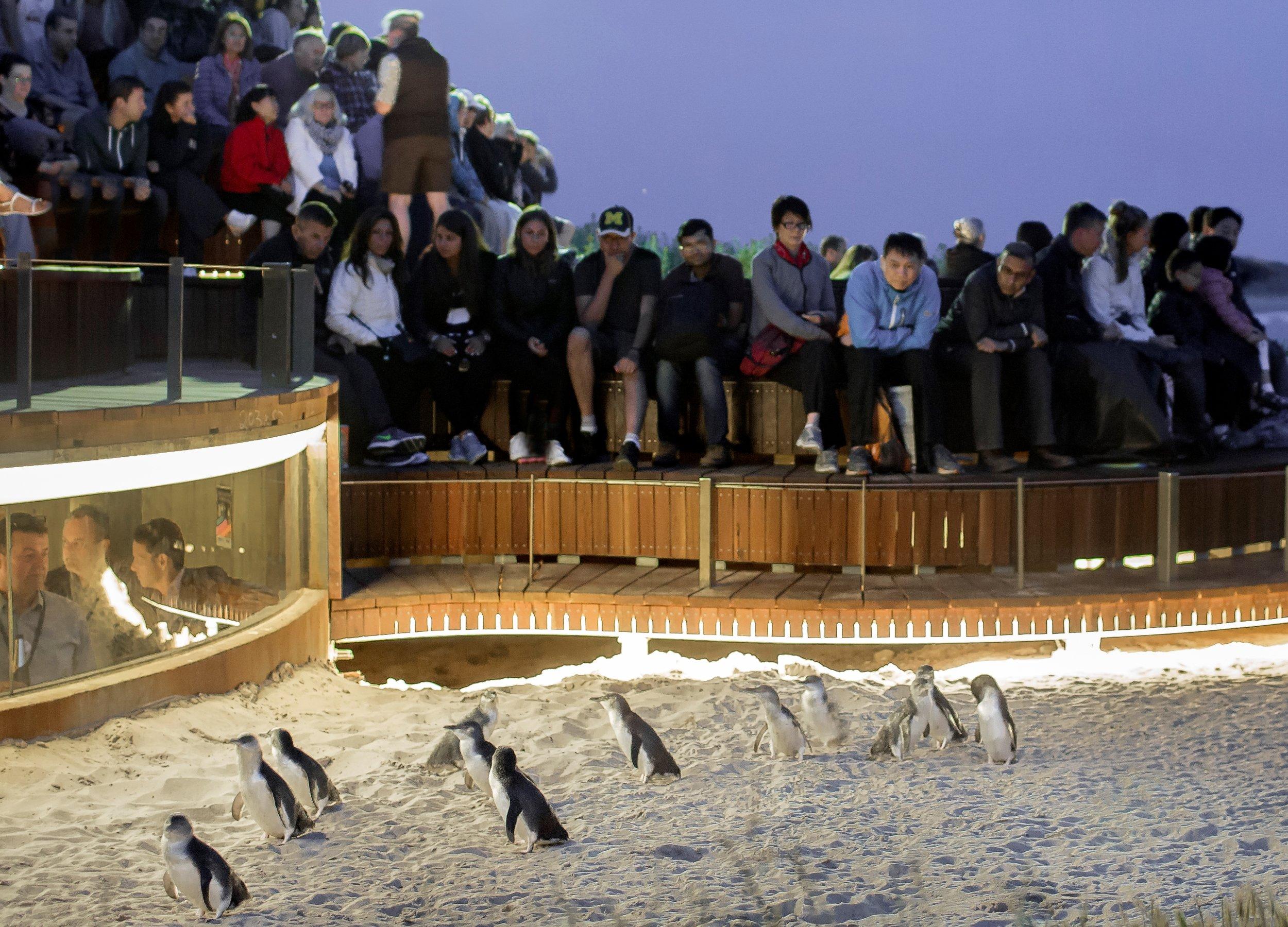 Penguins Plus - Cropped.jpg