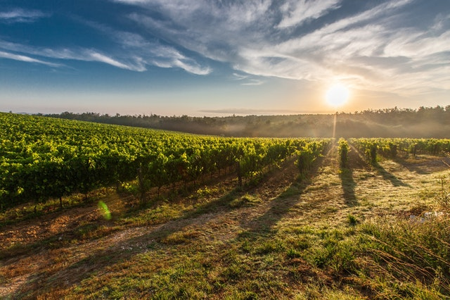 Local Vineyards - Why not visit some of our local vineyards such as Chateau du Rosnay and J Mourat where you will be able to sample and purchase a variety of locally produced wines.