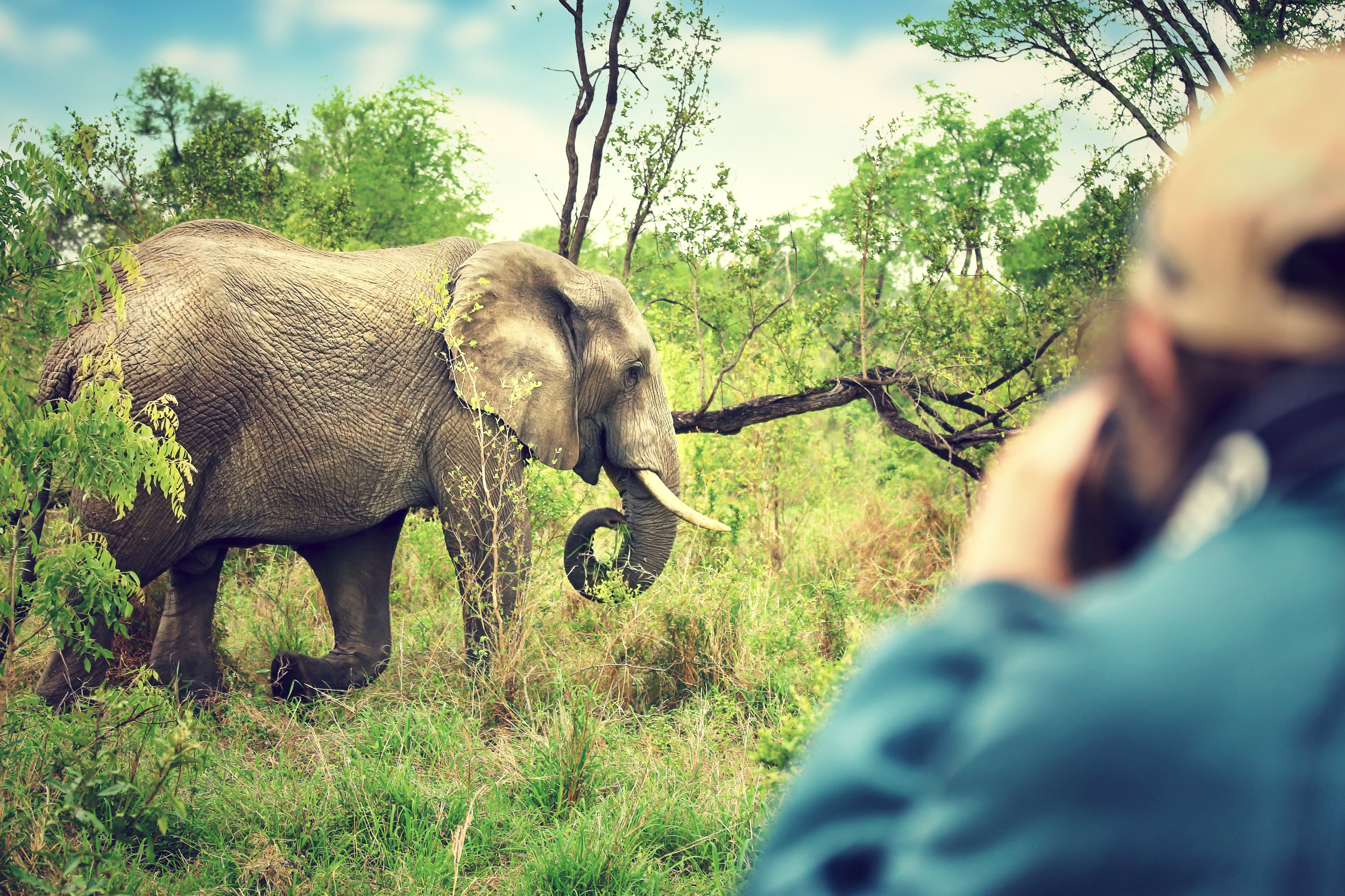 In Search of the Big Five... -