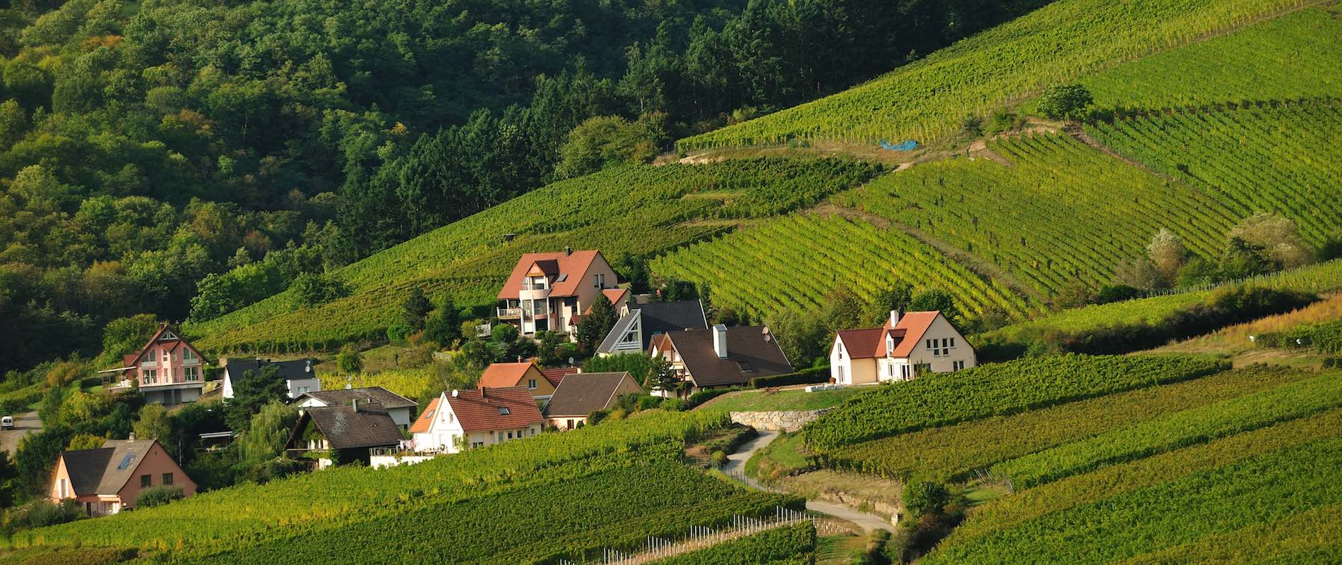 The Wine Villages of the Alsace -
