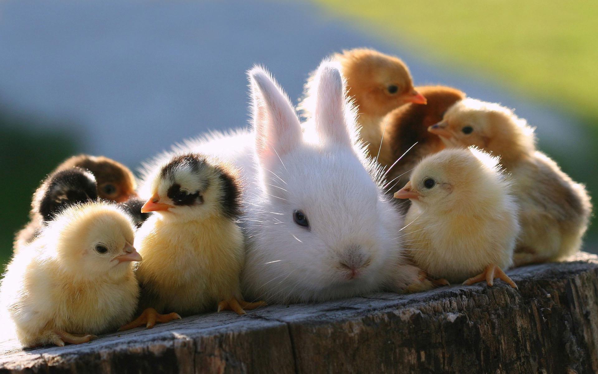 6158307-images-animals.jpg