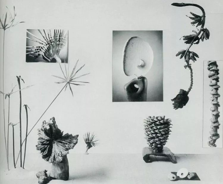 New Horizons in Flower Arrangement by Myra J.Brooks with Mary Alice & John P. Roche, 1961