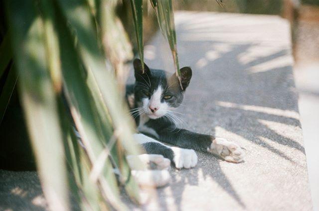 Greece diaries. Hello kitty.