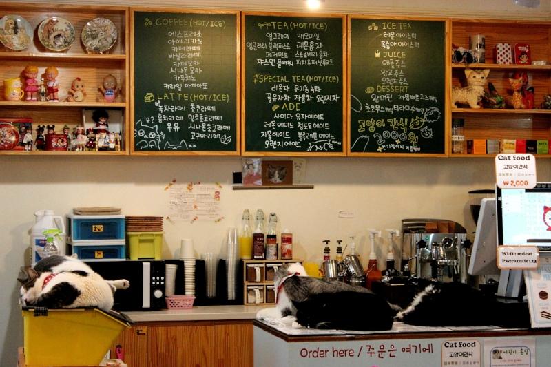 Cat Café in Myeongdong