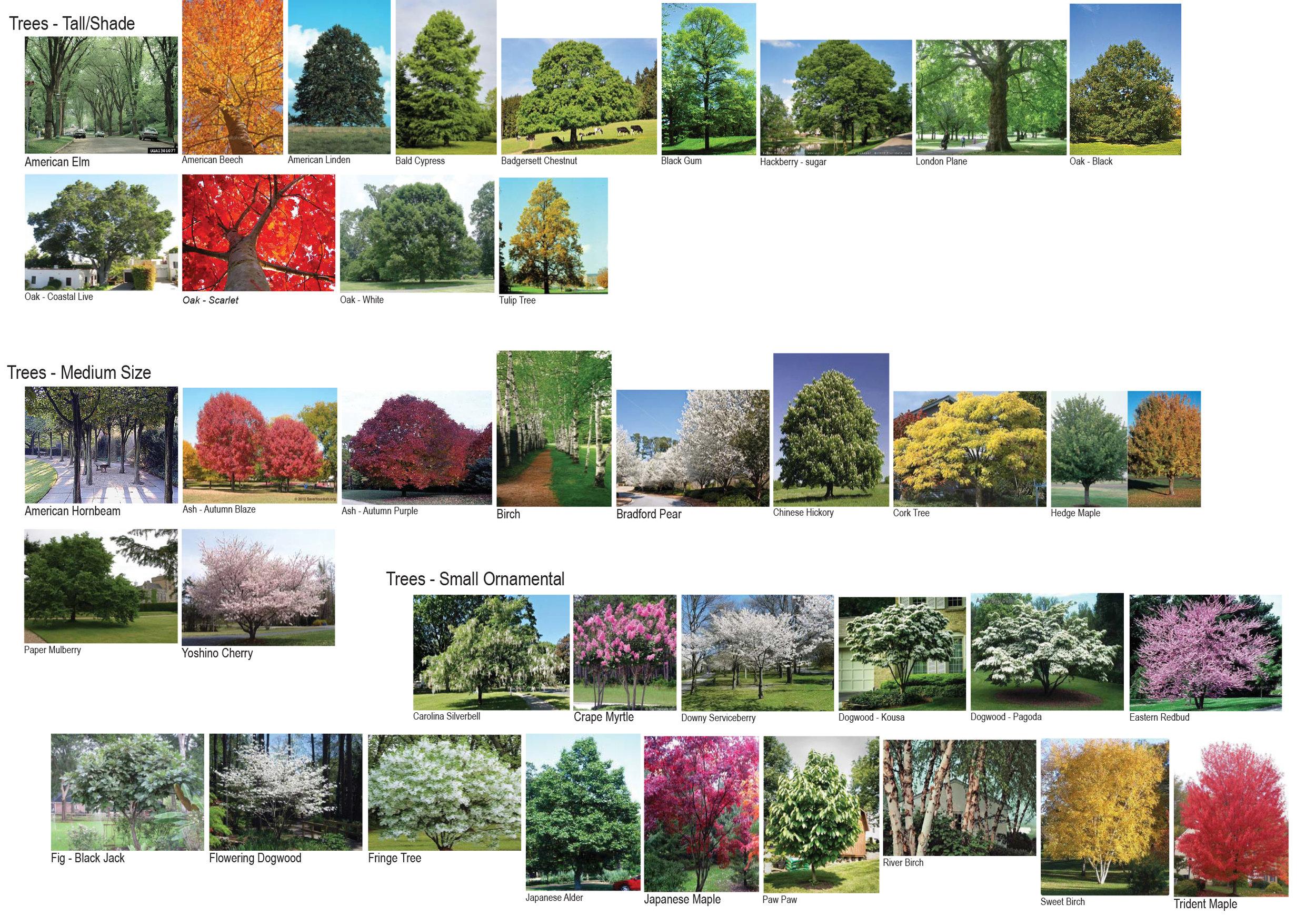 Plant Pallet-1.jpg