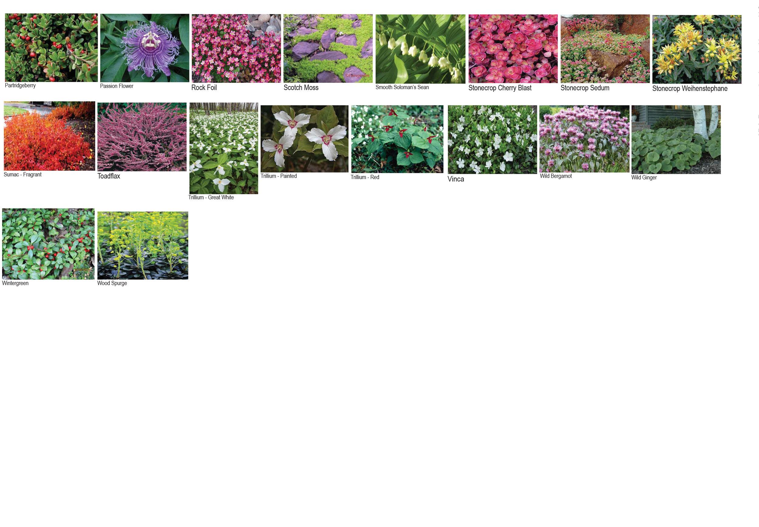 Plant Pallet-5.jpg