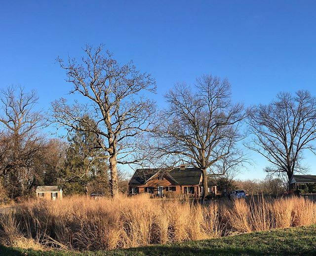 """A winter season photo snapped yesterday.  One of two bio-retention ponds at our project @ the Virginia Theological Seminary.  Learn more about this on our company website under """"company portfolio"""" and """"Virginia Theological Seminary"""""""