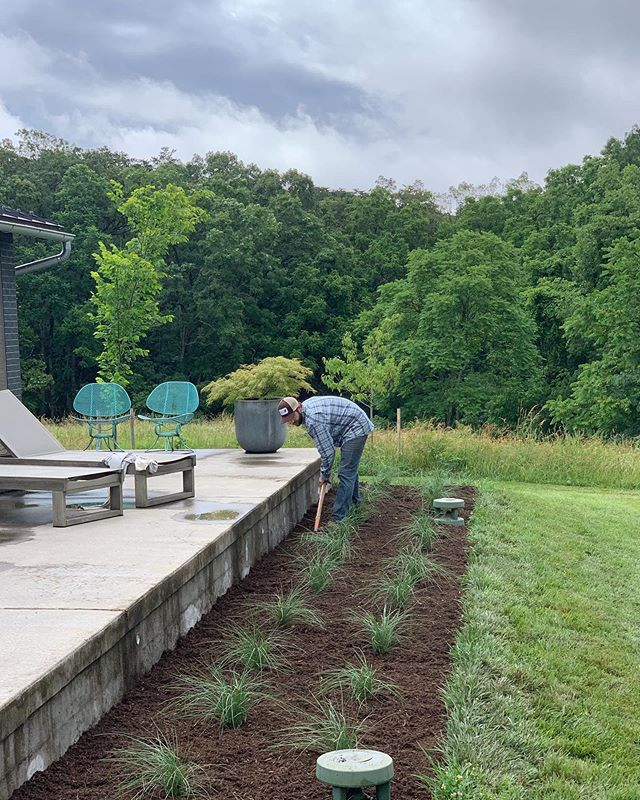 2nd phase Items for our Winchester project are going in (hardscape and planted). These White Cloud Muhlenburgia grasses placed around the Bose outdoor speakers are summer growers and will grow to about 3'-4' height/wide, with a beautiful white plumage.