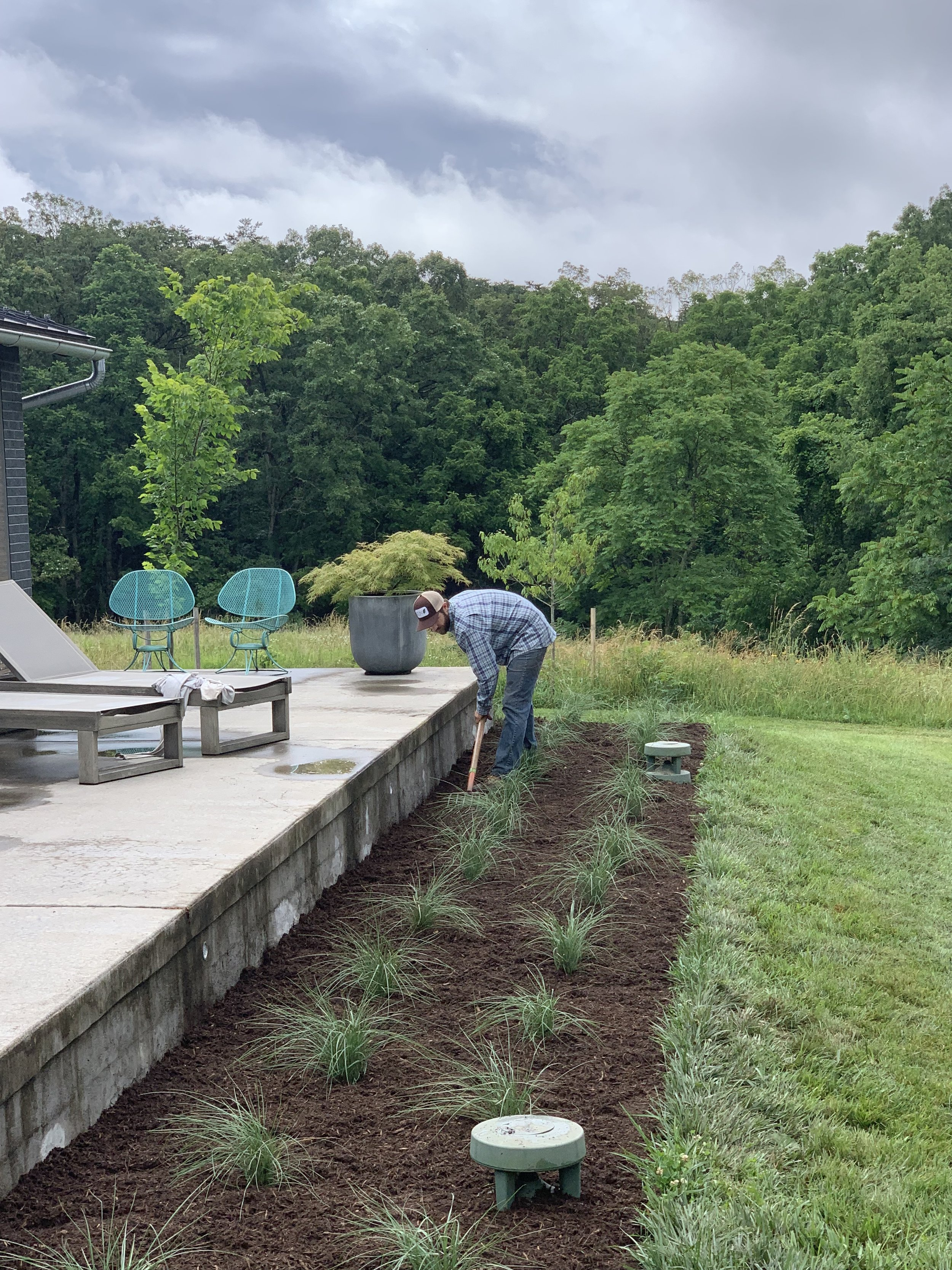 Construction process photo : Finishing touches being put on new White Cloud Muhlenburgia Grass plantings by landscape installation contractor - planting of building foundation planting plan / summer 2019.