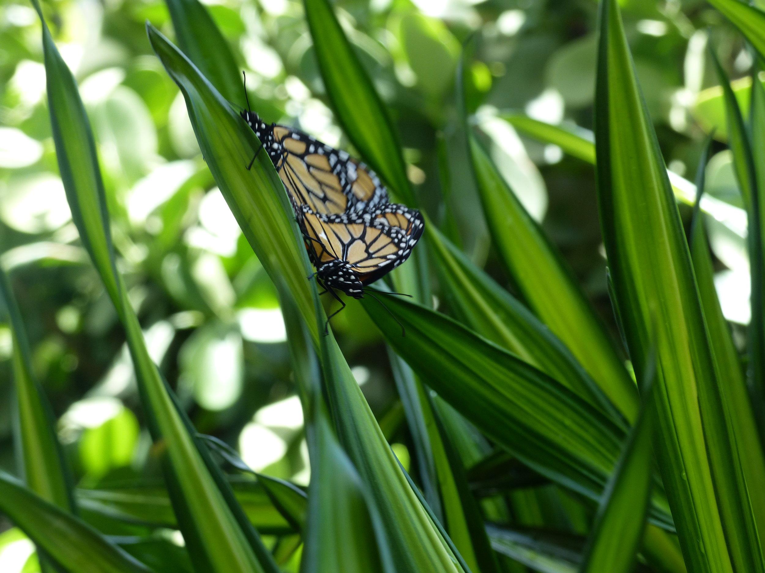 The butterfly farm
