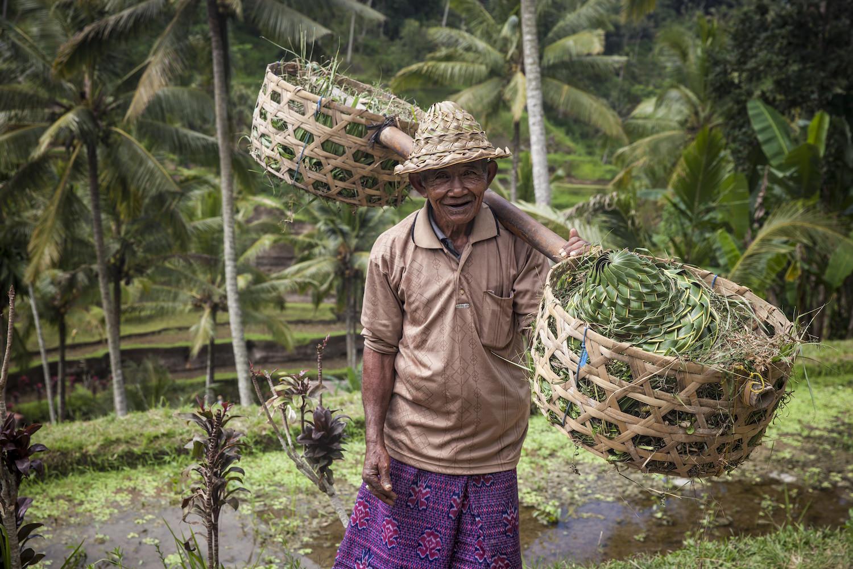 Bali_RiceFields.jpg