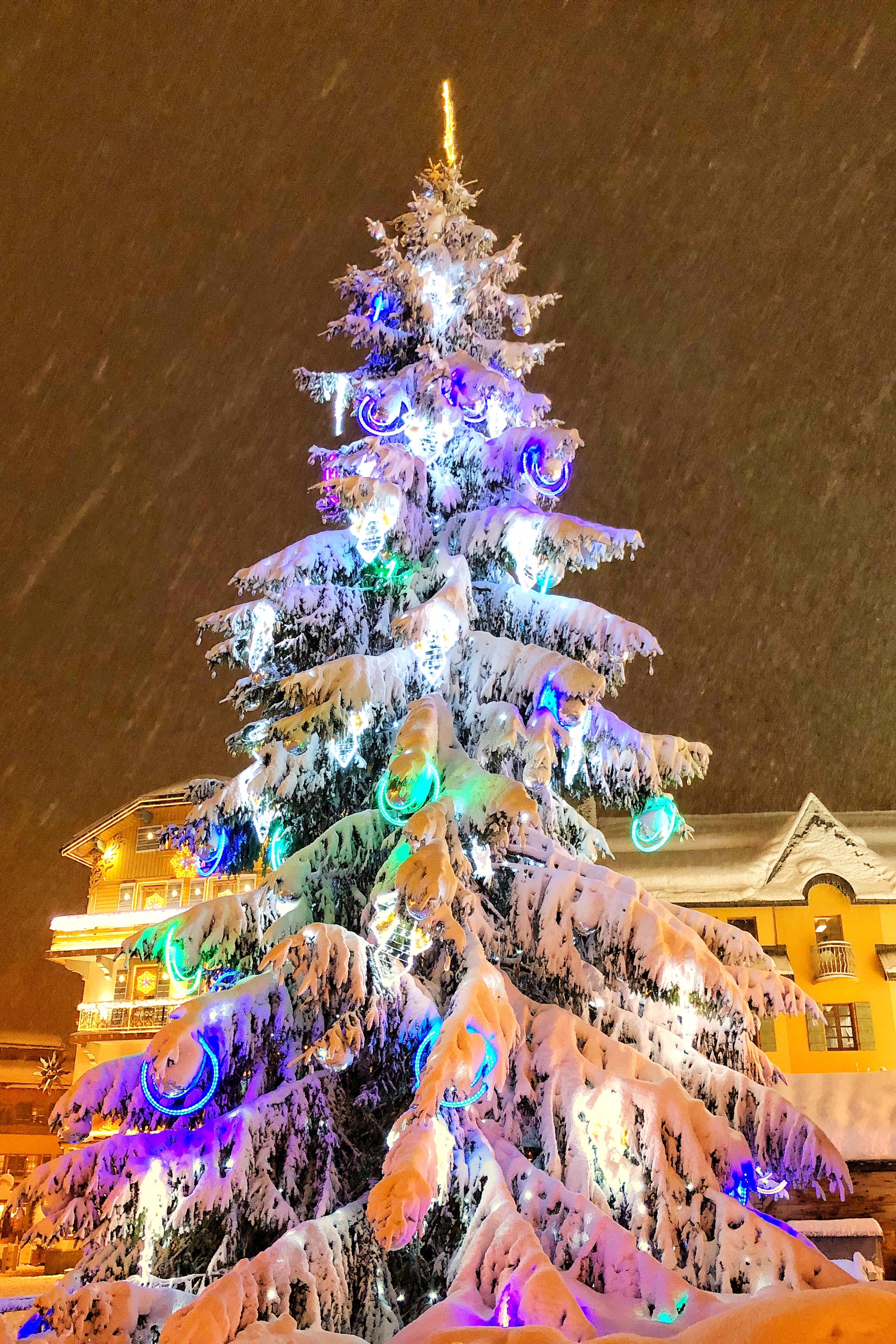 The Town-Square Tree laden with snow.