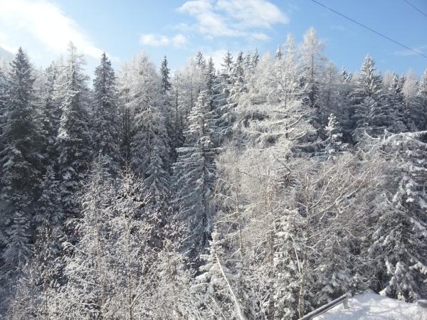 Snow on trees in Switzerland