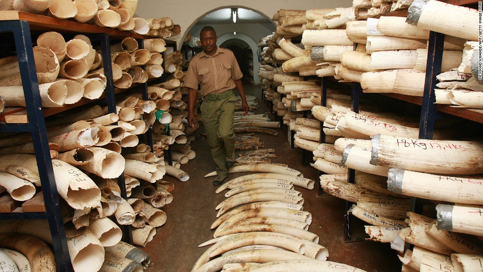 A room in Zimbabwe storing confiscated elephant tusks and rhino horns