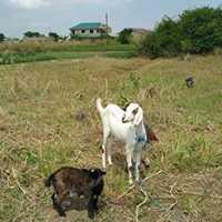 3-Agriculture with goat and kid.jpg