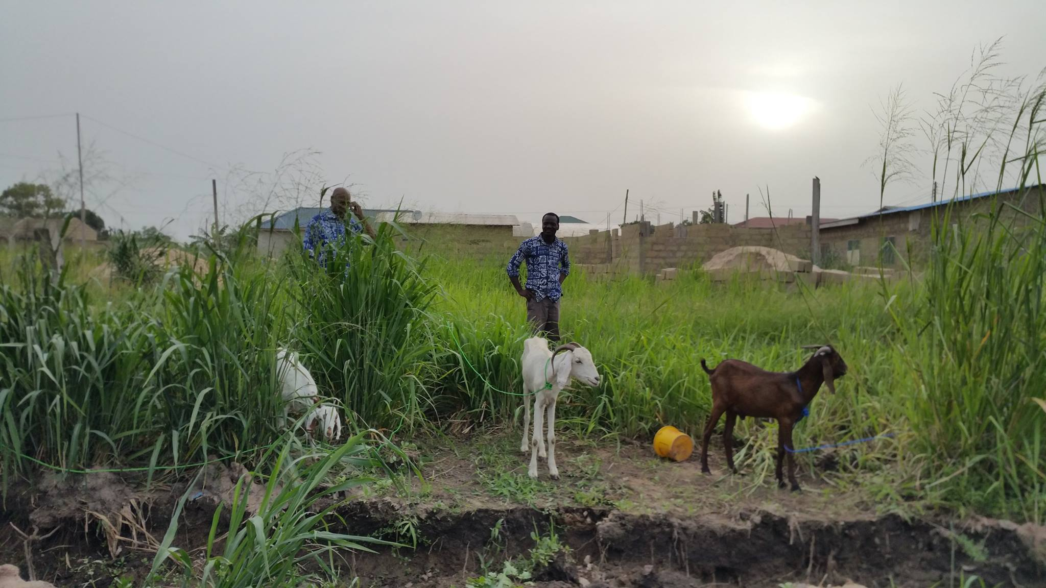 3-Agriculture with goats.jpg