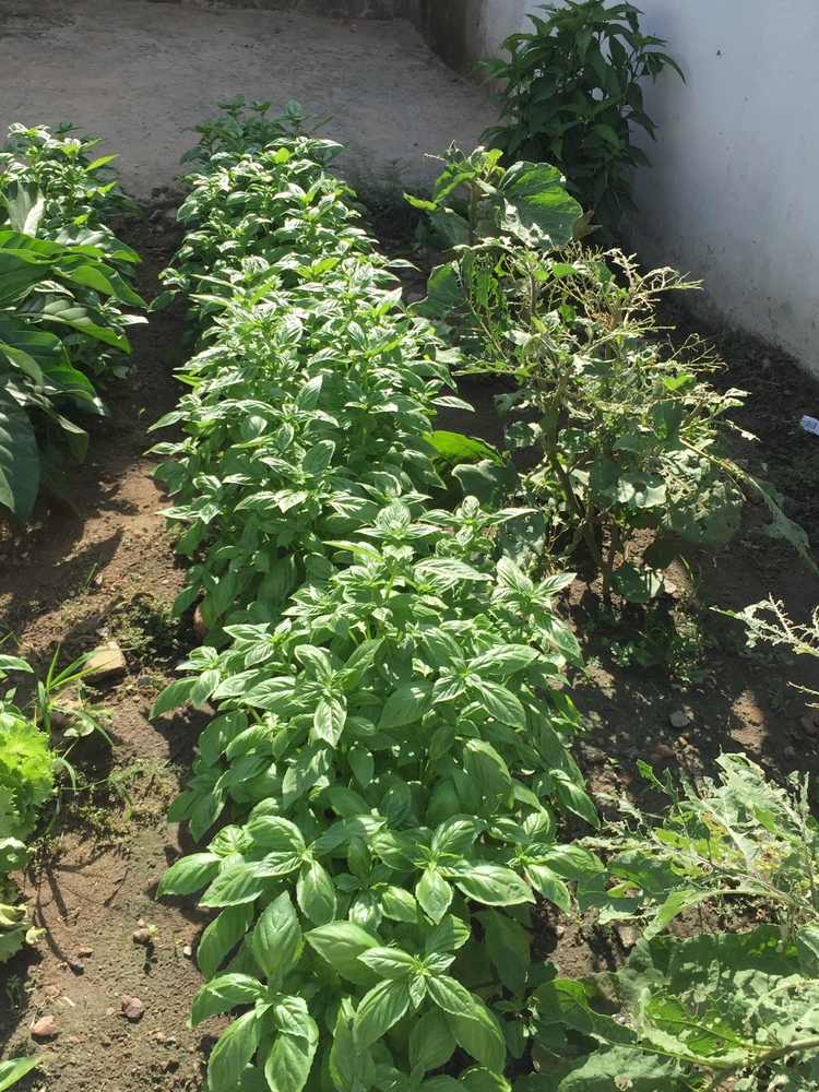 PHDA kitchen garden.png