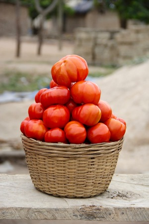 tomatoes in a basket.jpg