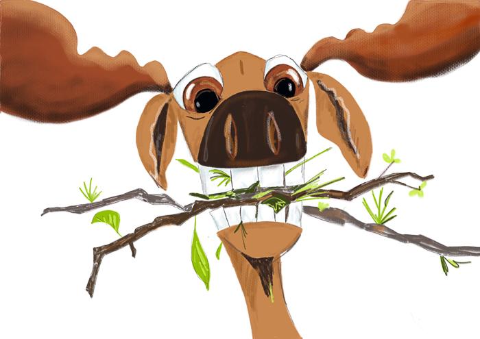 moose--2.jpg