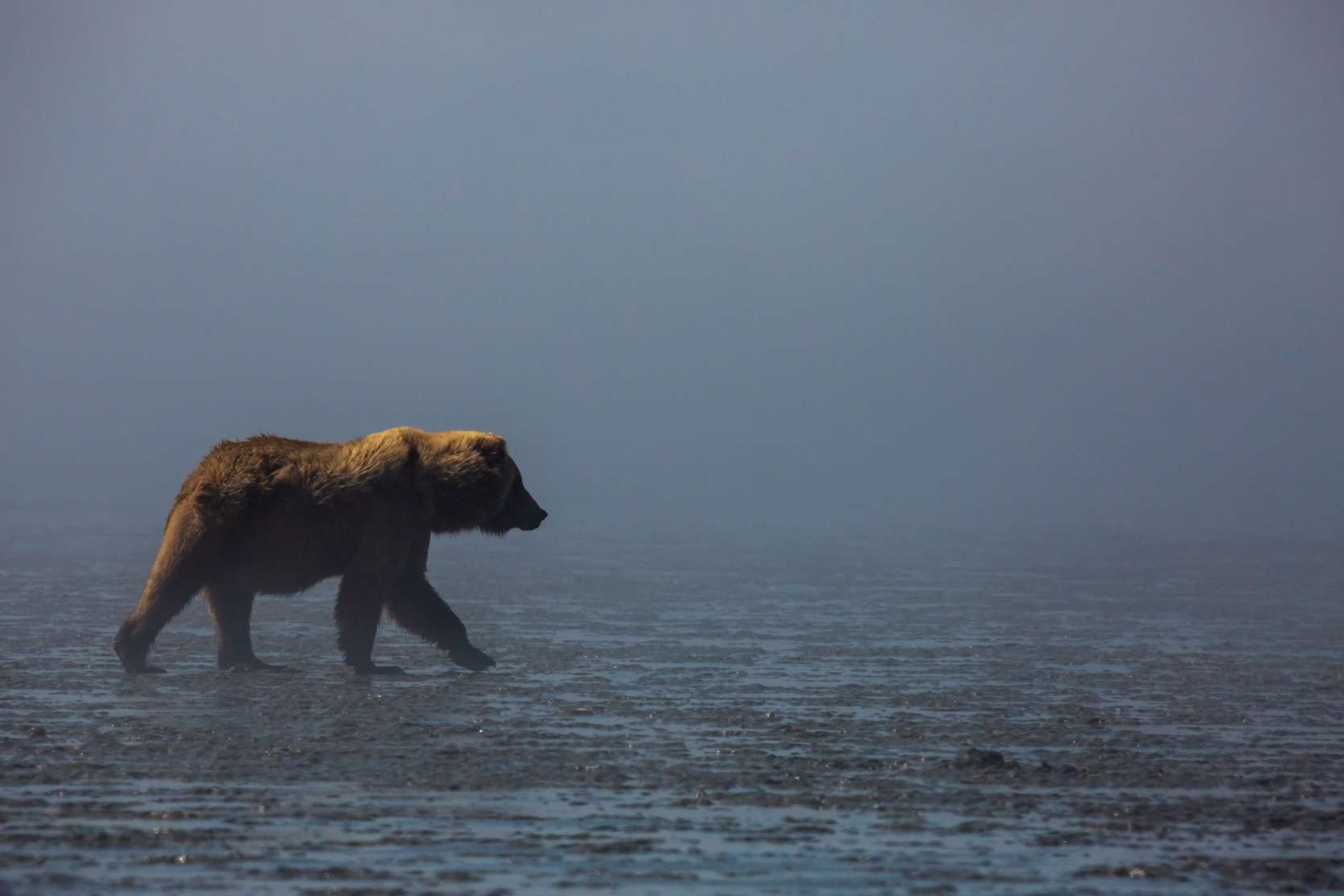Bear in Fog