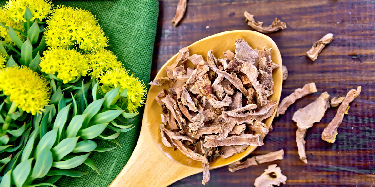 What Exactly Is Rhodiola and the Benefits of This Trendy Adaptogen? - Rhodiola (also known by its botanical name, rhodiola rosea) is an herb that's long been used in Europe to help promote physical endurance and combat the effects of high altitudes for hundreds of years. And, since this botanical has historically been used to help temporary anxiety and fatigue, it has become mighty popular in our modern, stressed-out, wellness-loving world. It's now pretty easy to find rhodiola extract, rhodiola supplements, and even herbal shots that contain the herb.