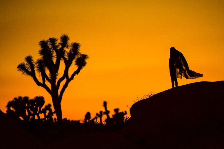 Desert Silhouettes (Joshua Tree, CA), 2014
