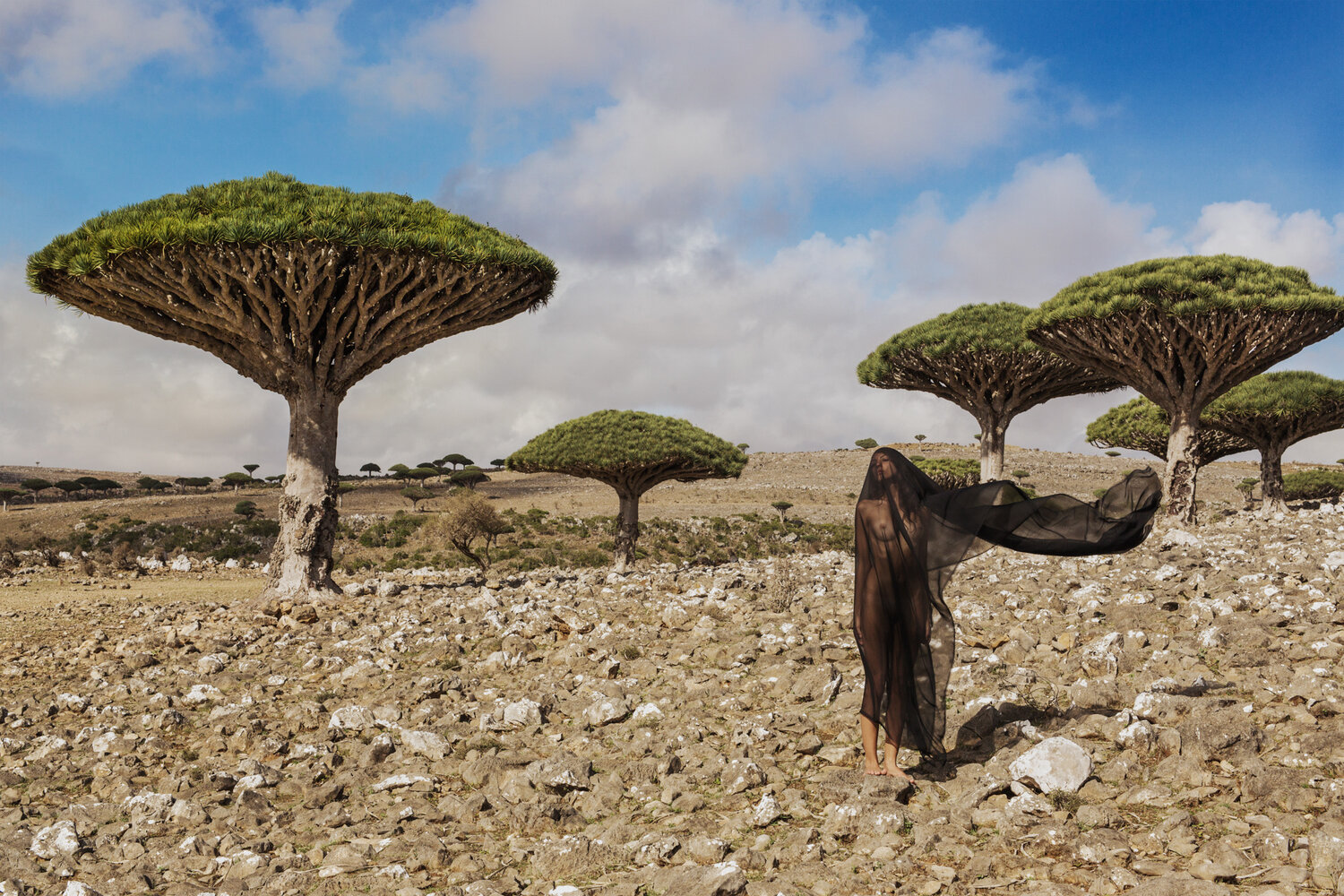 Salvation of Socotra, (Socotra, Yemen), 2016