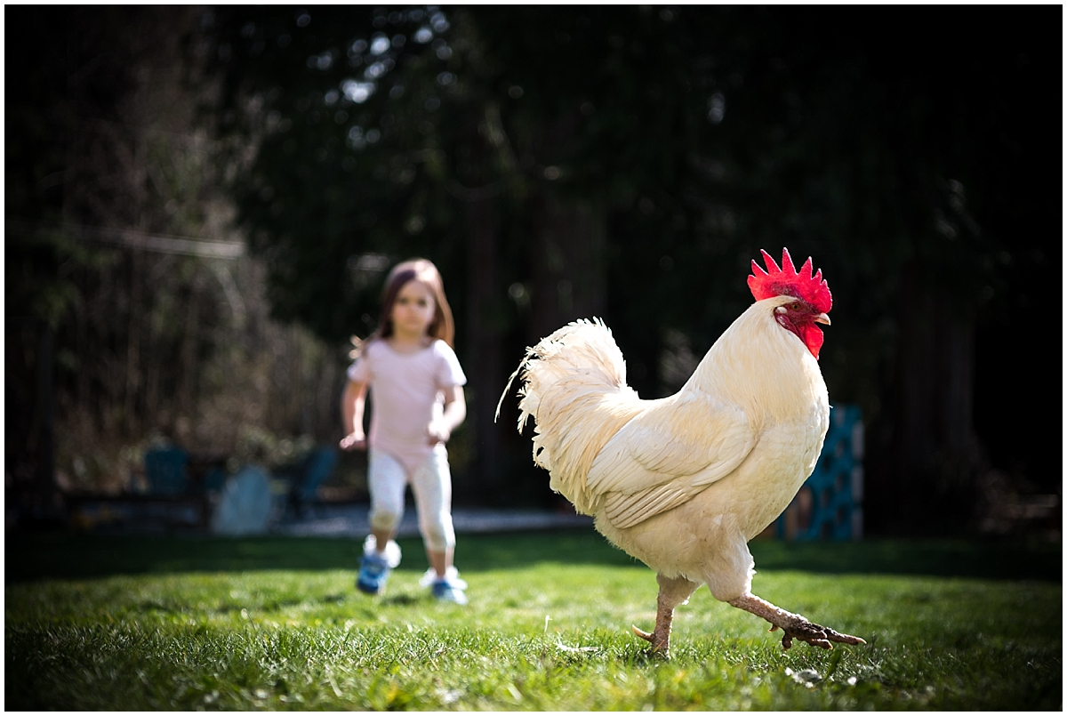 "And the rooster says ""toodaloo, motherfucker."" I LOVE that these kiddos get to experience the magic of having livestock in their very own backyard! Something I will strive for, until I get it! I also plan on adopting an old tortoise too, one day when I own a yard."