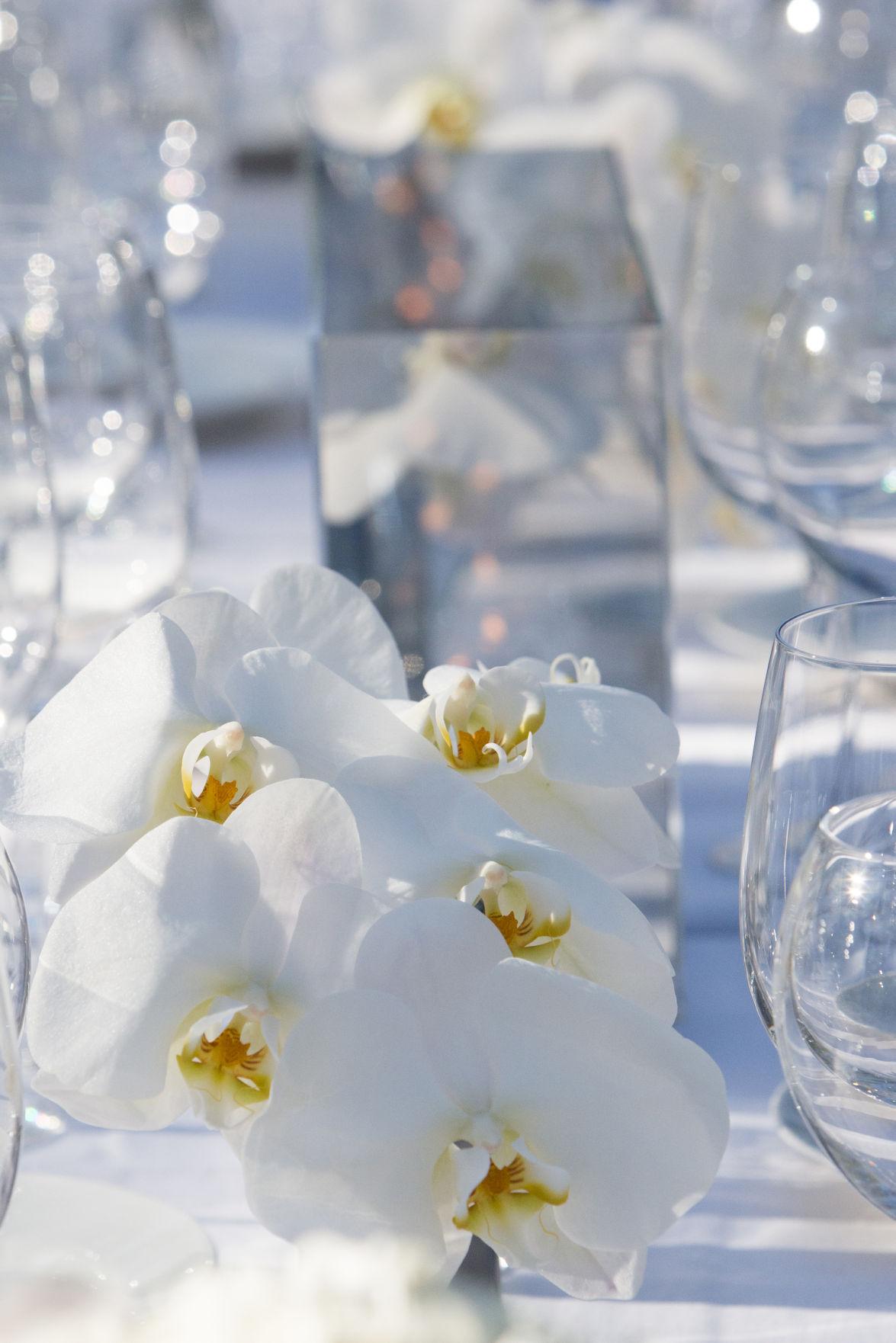 Phalen Flowers.jpg