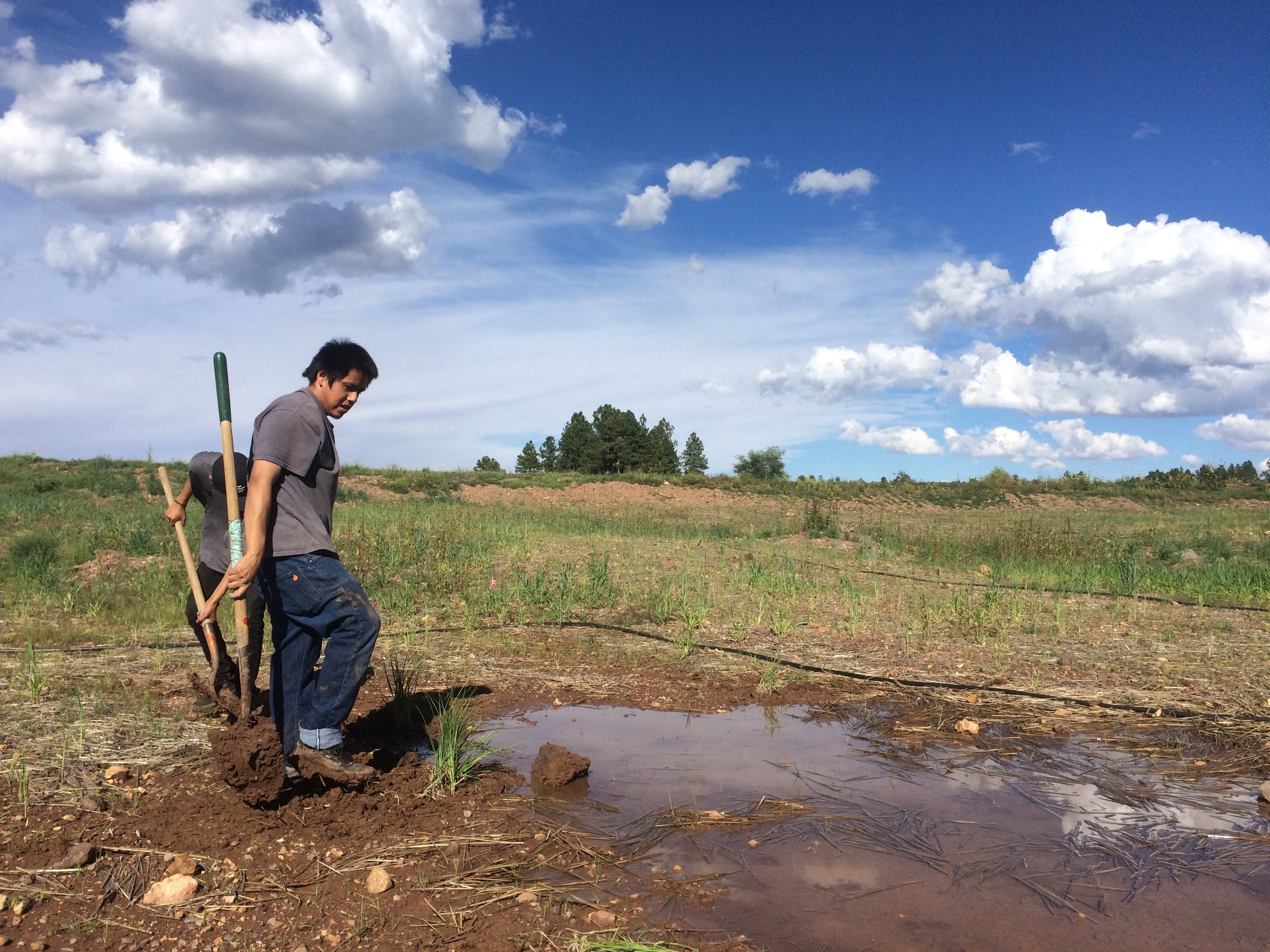 Youth interns working to restore the Kachina Wetlands south of Flagstaff, Arizona. Summer 2018.