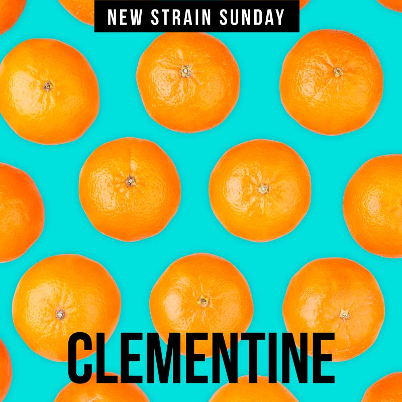 CCM-Clementine.jpg