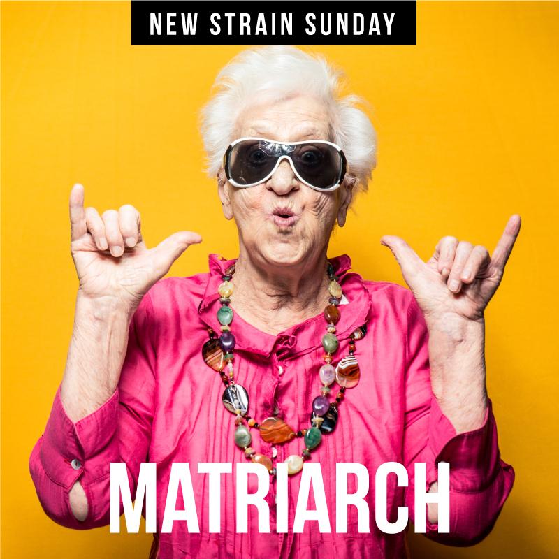 CCM-Matriarch.jpg