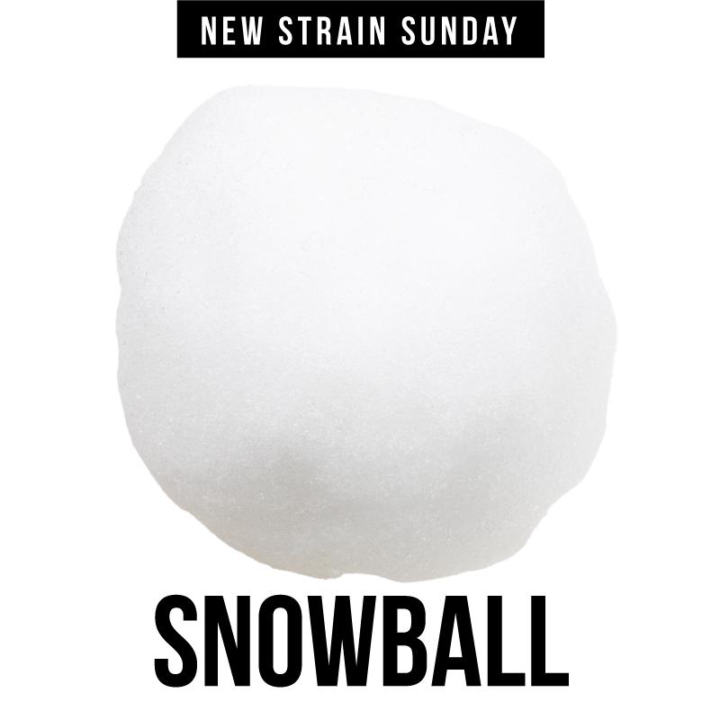 CCM-snowball.jpg