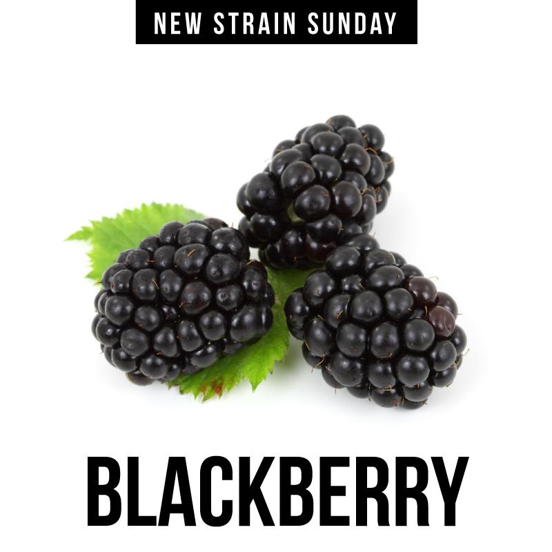 CCM-blackberry.jpg