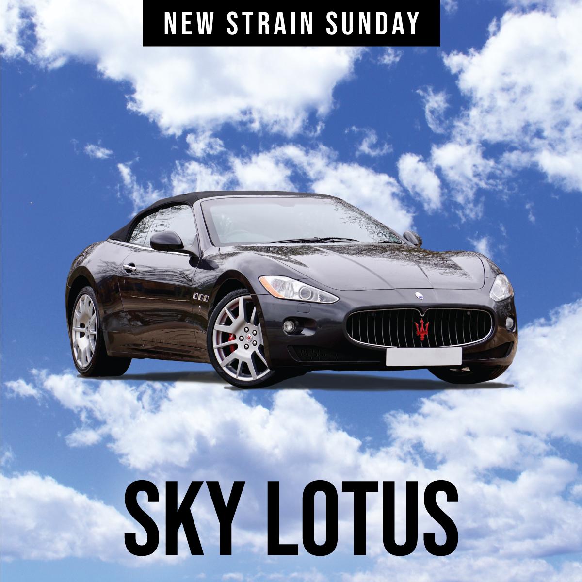 CCM-Sky-Lotus.jpg