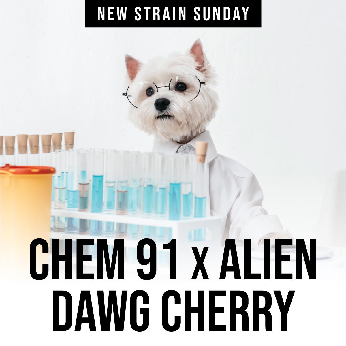 CCM-ChemAlienDawgCherry.jpg