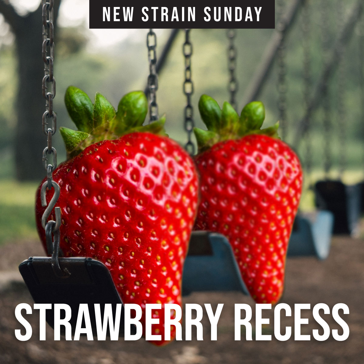 CCM-strawberry-recess.jpg