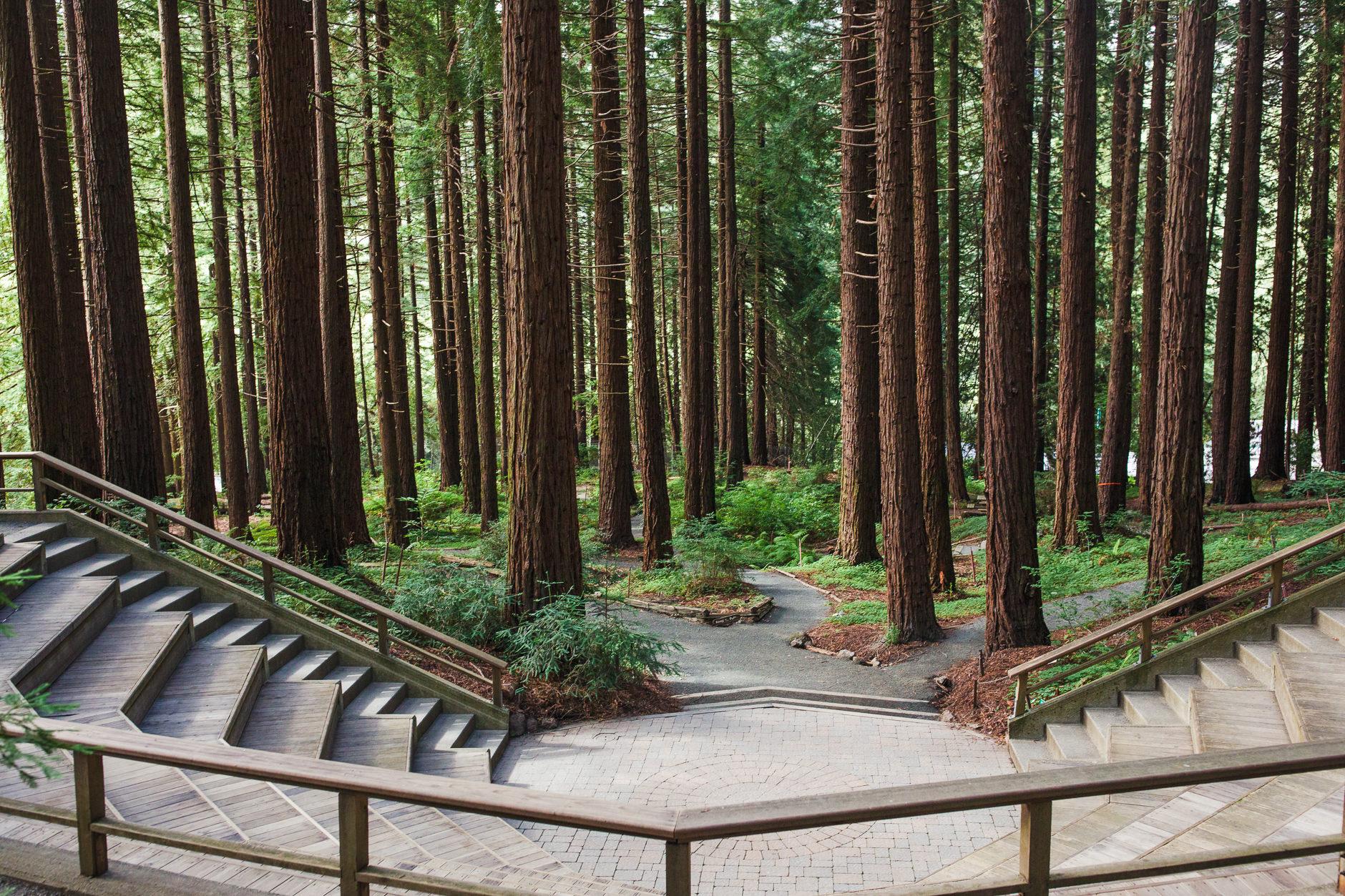Berkeley Botanical Gardens (Redwood Amphitheatre) - Price Average: $2,200- $3,000Max Capacity: 200Mood: serene, humble, harmonious Location: Berkeley, CA