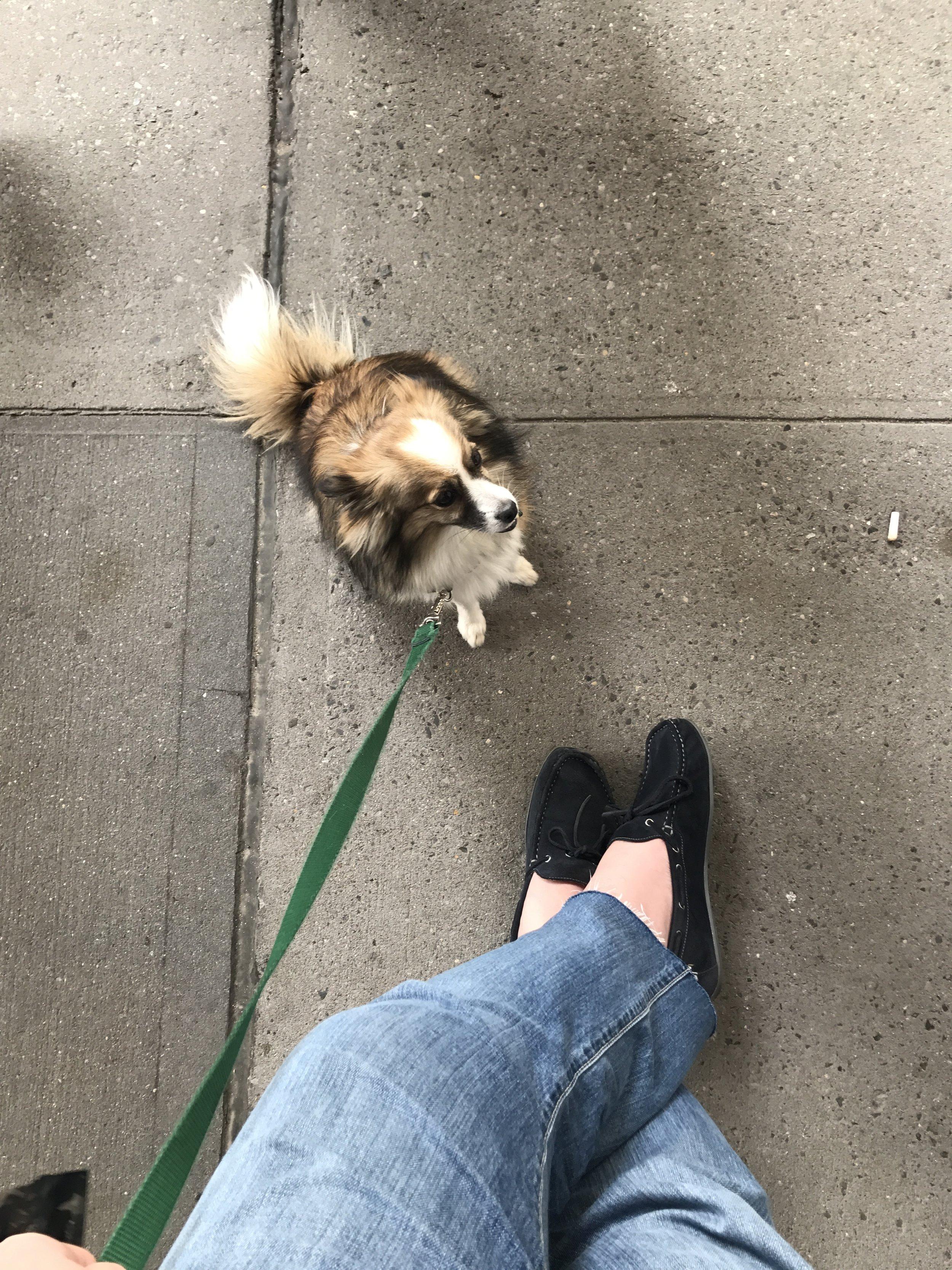 @amysedaristhedog likes my shoes, do yous?
