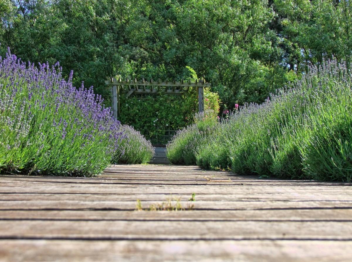 lavender_nature_purple_flower_herb_natural_aromatherapy_summer-593715.jpg