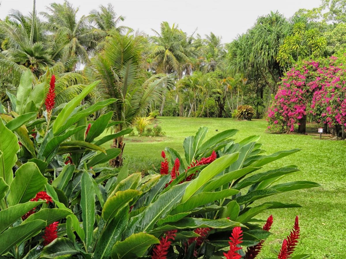 guan_landscape_scenic_plants_flowers_palms_palm_trees_nature-1131006.jpg