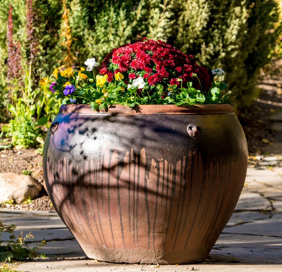 flowers_potted_plant_floral_colorful_green_gardening_nature-418566.jpg