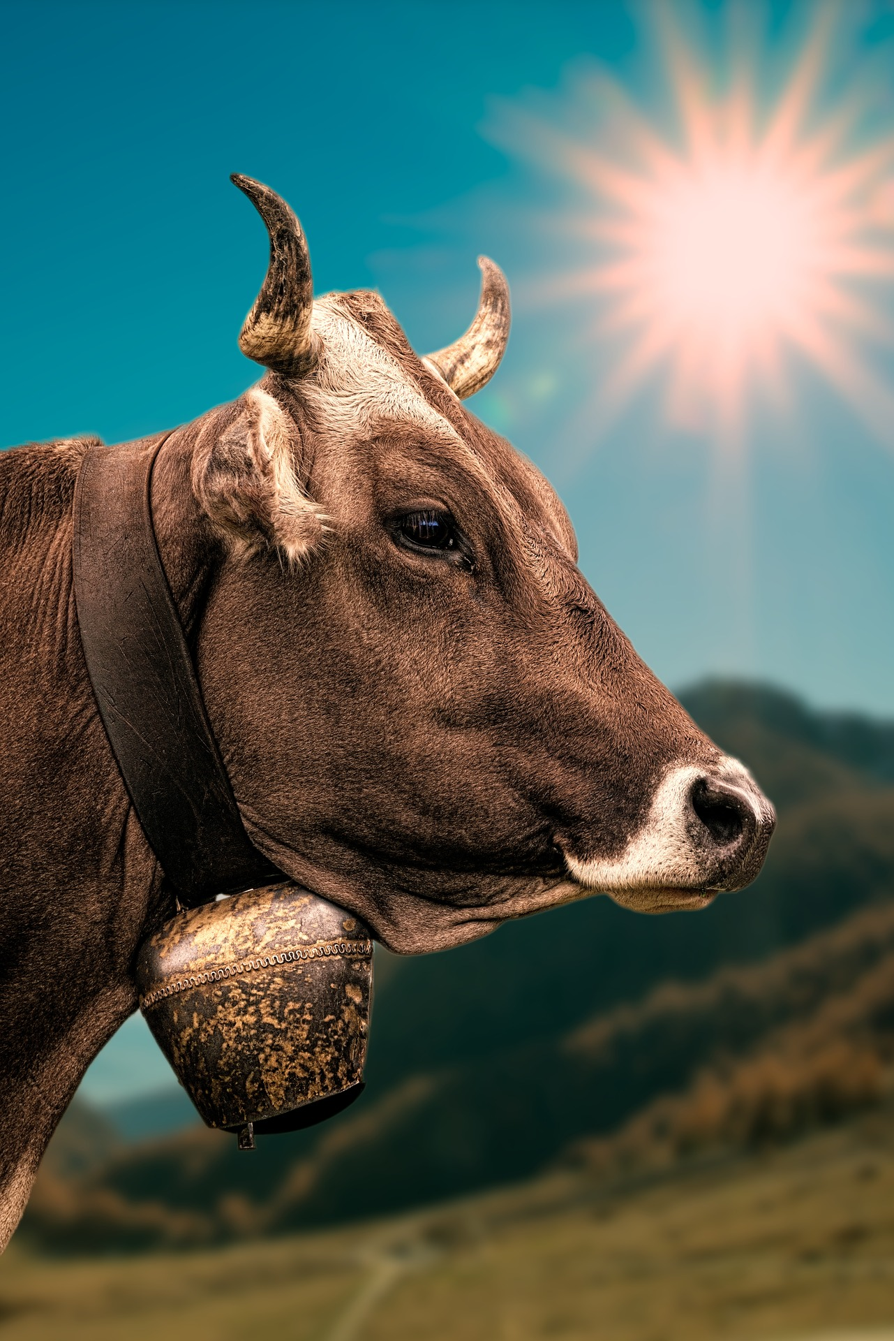 cow-2193018_1920.jpg