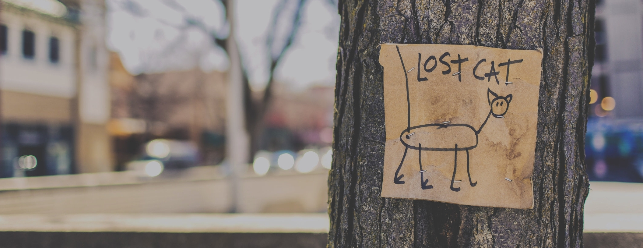lost-cat-tree-sign-fun-159868.jpg