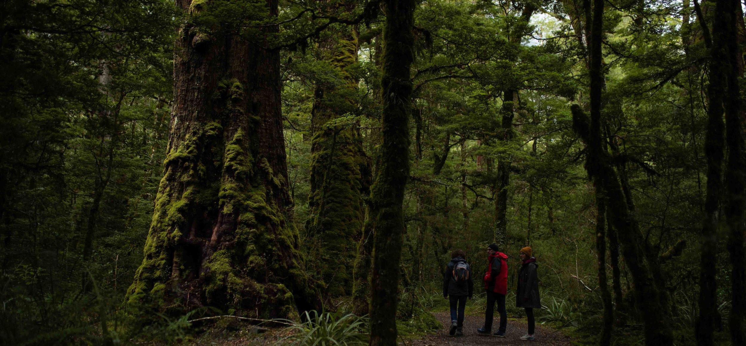 Lake Gunn Nature Walk.JPG