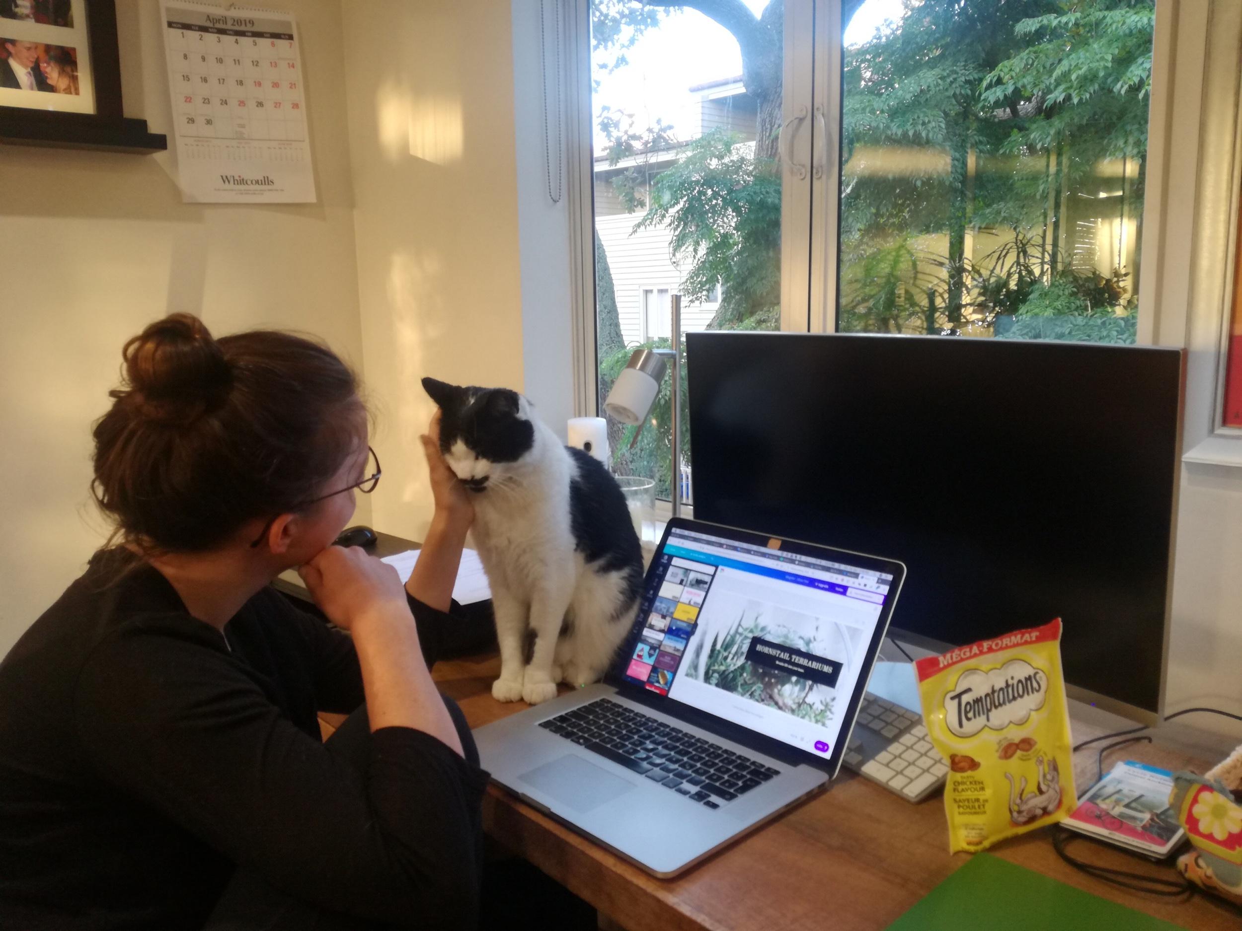 UNser alltag als Katzen-Sitter - Ganz wichtig: Streicheleinheiten und Leckerlies!